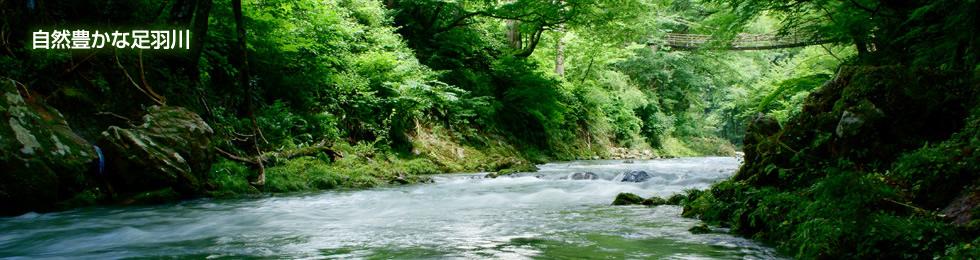 自然豊かな足羽川